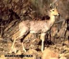rowland ward, sci, Reedbuck (mountain)